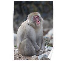 Zen monkey Poster