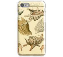 Neues systematisches Conchylien-Cabinet - 189 iPhone Case/Skin