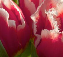Fringed tulips Sticker