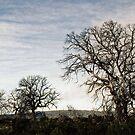 Tassie trees by rjpmcmahon