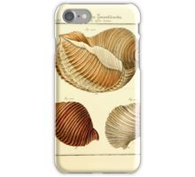 Neues systematisches Conchylien-Cabinet - 220 iPhone Case/Skin
