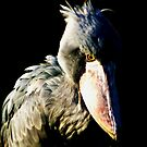 Shoebill by kibishipaul