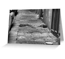 Napoli Cats Greeting Card