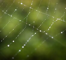 Spider Web in Green  by Michelle McConnell