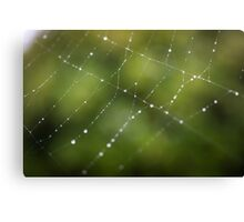 Spider Web in Green  Canvas Print