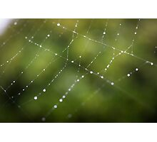 Spider Web in Green  Photographic Print