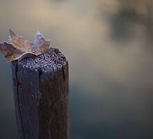 A leaf on the river's dock by sandroo