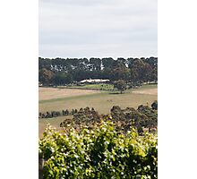 Pier 10 Winery Photographic Print