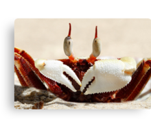 Stalk-eyed ghost crab - Ocypode ceratophthalma Canvas Print