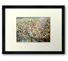 ©NS Nature Fractal IIA. Framed Print