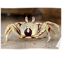 Stalk-eyed ghost crab - I'm outa here!! Poster