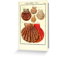 Neues systematisches Conchylien-Cabinet - 360 Greeting Card