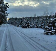 Winter  by Gaz Gazmajster