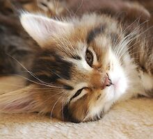 I want to go to sleep now! by elainejhillson