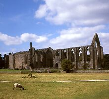 Bolton Abbey Ruins. by Brunoboy
