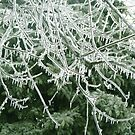 Ice Branches by Linda Miller Gesualdo