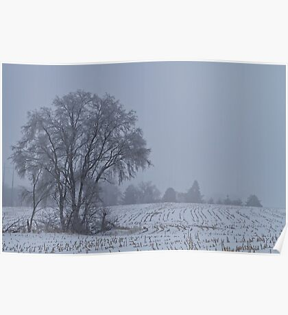Frozen Branches and Fog Poster