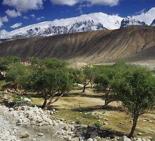 Mountain, Gobi and Tree by Leo Shum