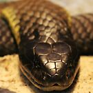 Chappell Island Tiger Snake by Dave Cauchi