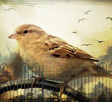 Sparrow ala' POE by Michelle Anderson
