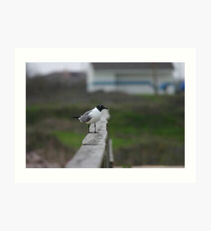 Lone Seagull  Art Print