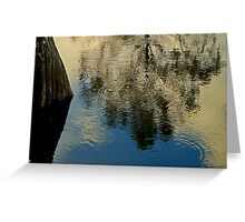 Cypress Evening  Greeting Card
