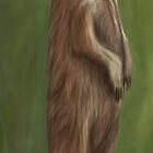 Its a Meerkat by Adam Howie