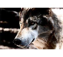 Hunter Photographic Print