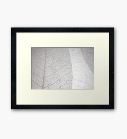 Isolated Leaves Framed Print
