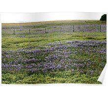 Lavender's Blue.... Poster