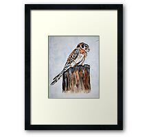 Marvin's Kestrel Framed Print