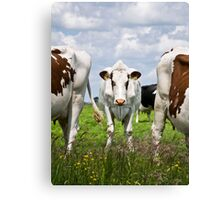 Milk Cow Canvas Print