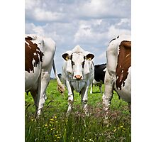 Milk Cow Photographic Print