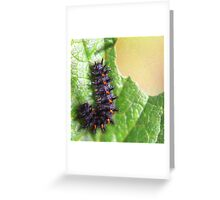 Fuzzy caterpillar eating a leaf Greeting Card