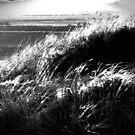 Field Of Dreams by L. Haverkamp