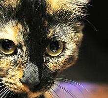 cat 1 by Kara Brink