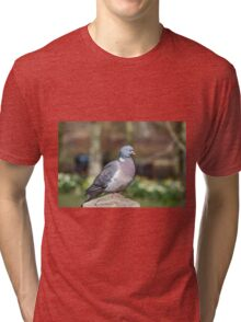 Wood Pigeon Perched On Post Tri-blend T-Shirt
