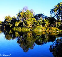 Reflections by Julia Harwood