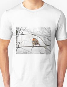 Robin On Frosty Branch T-Shirt