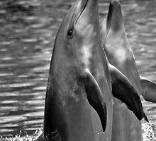 Dolphin Twins by Ersu Yuceturk