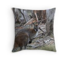 Wallaby on the Yankee Hut trail Throw Pillow