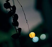 Hanging vine dipped in bokeh lights by Clayzee