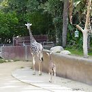 Mother & Baby Giraffe by ellc