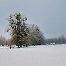 Mistletoe Tree by RayDevlin