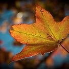 Autumn Leaf by Benn Hartung