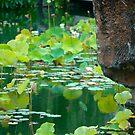 Chinese Gardens by Hughsey