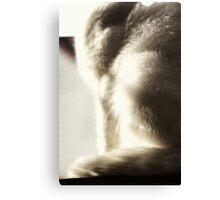 Cat Fur in the Sun Canvas Print