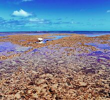 Abrolhos Islands 3 by Kerryn Benbow