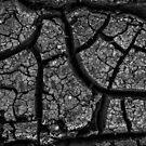 Drought by Jeffrey  Sinnock