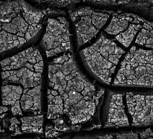 Drought by Jeffrey  Sinnock